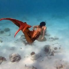 @thepandoramermaid swimming in the ocean of Bonaire. Subscribe to my YouTube for more videos Mermaid Gifs, Fin Fun Mermaid, Mermaid Swimming, Mermaid Tale, Mermaid Videos, Fantasy Mermaids, Mermaids And Mermen, Ocean Creatures, Fantasy Creatures