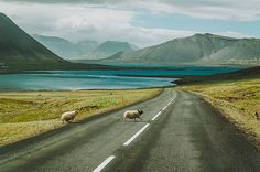 """A post of Icelandic Roads  by Michalina Okreglicka  """"I moved to Iceland around 16 months ago. During this time, I traveled a lot all around Iceland. This country is very beautiful and misty. Most of the pictures were taken in the road number 1. The main road in Iceland."""""""