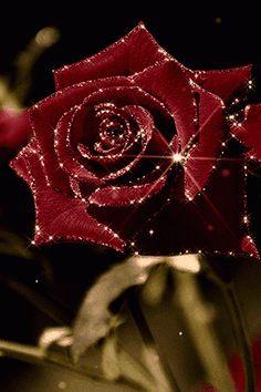 FaTiMa__Bildergebnis für Gifs Rosen rot