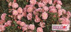 Satina® Fairy Tree, Rose Trees, Pink Roses, Bloom, Plants, Google, Plant, Planets, Pink Trees