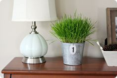 how to sprout wheat grass ~ a fun decorating tool for springtime