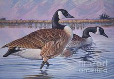 Canadian Geese By Robert Corsetti on FFA. Duck Stamp contest entry.