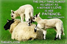 The only thing almost as great as a mother's love is her patience. * * Doe Zantamata.