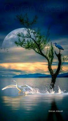 U nich to ich związek jest bez sensu, a nie kłótnie xd Beautiful Nature Pictures, Beautiful Moon, Amazing Nature, Beautiful Birds, Fantasy Landscape, Landscape Art, Landscape Paintings, Landscape Photography, Nature Photography