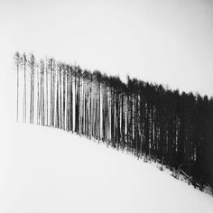 Beautifully graphic image of trees against a landscape of snow. Abstract Photography, Nature Photography, John Batho, Minimalist Photography, Belle Photo, Black And White Photography, Monochrome, Illustration Art, Landscape