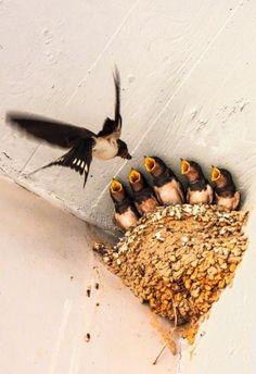 Catalpa Street - A SWIFT Moment! Love this bird photo.