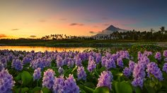 Sunset View of Mayon Volcano by Rye de Asis on 500px
