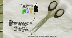 The BEST DIY Bunny Toys. Endless fun for your bunny -made with household objects- your bunny will love all our DIY rabbit toys. Tested and bunny approved!