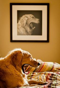 Dogs have given us their absolute all.  We are the center of their universe.  We are the focus of their love and faith and trust.  They serve us in return for scraps.  It is without a doubt the best deal man has ever made. – Roger Caras | Photo of Golden Retriever