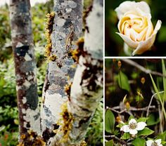 Pretty Nature :) flowers and trees :)
