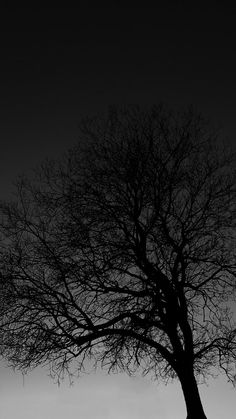 Black Tree - My Wallpaper Emo Wallpaper, Black Background Wallpaper, Black Phone Wallpaper, Tree Wallpaper, Galaxy Wallpaper, Wallpaper Quotes, Black Backgrounds, Wallpaper Backgrounds, Colorful Backgrounds