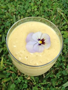 gut healing smoothie by http://julesgalloway.com/