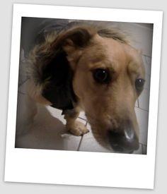 29.1.13 Dogs, Animals, Animales, Animaux, Pet Dogs, Doggies, Animal, Animais