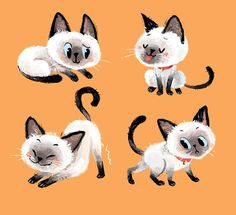 Siamese cat on Behance