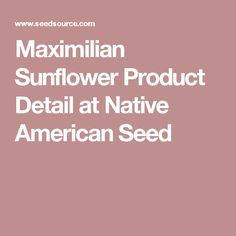 Maximilian Sunflower Product Detail at Native American Seed