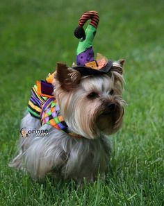 Happy Halloween.... now were is my broom