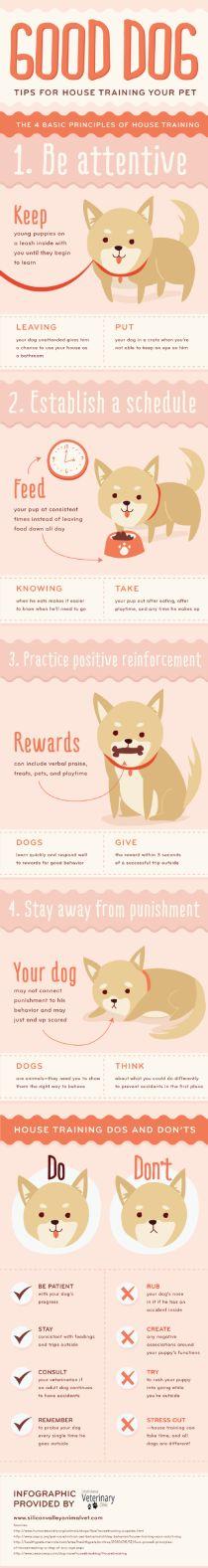 Tips para entrenar perros en casa...
