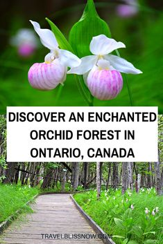 Discover an Enchanted Orchid Forest in Ontario Discover an enchanted orchid forest in Ontario, Canada Places To Travel, Places To Go, Travel Destinations, Travel Things, Travel Stuff, Fun Things, Ontario Travel, Ontario Camping, Canadian Travel