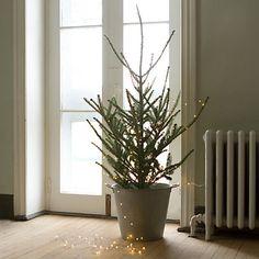 Single person Christmas tree with Stargazer Lights