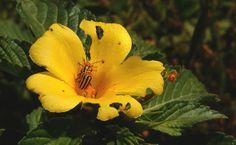 Escarabajo rayado del pepino es una de las plagas más serias en cultivos de melones #huerto #jardín