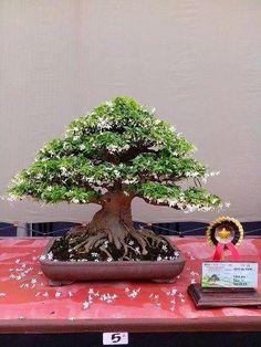 Beautiful Bonsai. :)