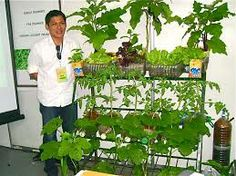 vertical gardening in the philippines Google Search