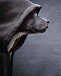 Dog in a hoodie - photo by Michael Brian