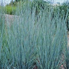 76 Best Grasses Blowing in the Wind images in 2016
