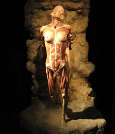 Resultado de imagen para gunther von hagens cycle of life Gunther Von Hagens, Human Tissue, Cycle Of Life, Popular Mechanics, Human Art, Human Anatomy, Science And Nature, Cape Town, Body Works