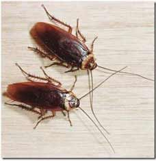15 Insects You Can Use To Cure Wounds And Diseases