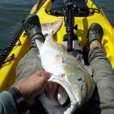 "40"" Bull Redfish - High Island, TX"