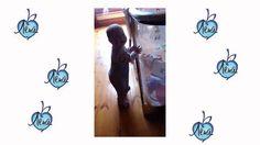 Смешной малыш танцует на свой день рождения. Забавный музыкальный клип