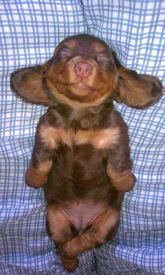 Doberman puppy ❤️