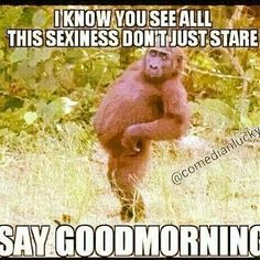 Good morning!  Lol ;D LO Make You Smile, Funny Sayings, Funny Memes, Labrador, Happy Friday, Monkey, Pup, Motivational Quotes, Make It Yourself
