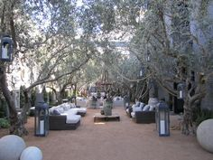 outdoor courtyard with olive trees