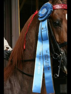 World's Champion ribbon