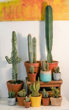 Awesome and heart winning cactus plants are awesome enough to make your space more vibrant look. Awesome and heart winning cactus plants are awesome enough to make your space more vibrant look. Cactus Pot, Mini Cactus, Cactus Flower, Indoor Garden, Garden Plants, Indoor Plants, House Plants, Pot Plants, Cacti And Succulents