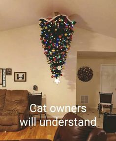 Christmas with cats