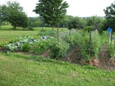 Discover the best plants for your very own backyard vegetable garden. Check out our article that shows you the easiest plants to get started. Backyard Vegetable Gardens, Potager Garden, Tomato Garden, Tomato Plants, Tomato Support, Growing Gardens, Tomato Cages, Growing Tomatoes, Cool Plants
