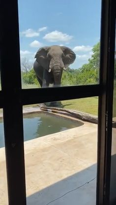 Elephant isn't a fan of being observed 🔥 - Lustiges tier Funny Animal Videos, Cute Funny Animals, Cute Baby Animals, Animals And Pets, Cute Cats, Amazing Animals, Animals Beautiful, Funny Cat Memes, Funny Cats