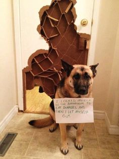These 27 Dogs Are The Naughtiest Dogs Ever. But The Reason Why Is Absolutely Hilarious.