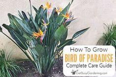 Amy Andrychowicz Arch Trellis, Diy Trellis, Exotic Birds, Colorful Birds, Bird Barn, Barn Owls, Birds Of Paradise Plant, Cucumber Trellis, Orange Bird