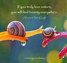 Si realmente amas la naturaleza se encuentra la belleza en todas partes. Tines que mirar la naturaleza al mas alla y encontrar lo bonito de ella. Como es bonito la aroma de las flores, los pasajes.