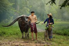 Handsome buffalo with Thai culture,Thailand by Saravut Whanset