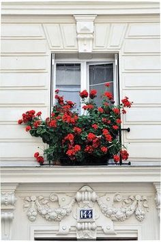 Nothing says Paris so much as red geraniums in a windowbox! www.lapetitesuzi.com  @aquamurielle