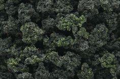 Woodland Scenics Forest Blend Bushes Clump-Foliage (32 oz. Shaker)