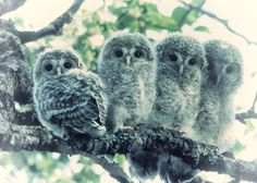 owl photography,green original animal art print sibling photo family picture cute wall art artwork nature print love décor baby picture by KaleidoscopesPHOTO2 on Etsy