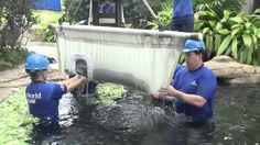 Update: Blanche, the orphaned manatee calf rescued last June, continues to gain weight and gets healthier by the day! The SeaWorld Animal Care Team has been bottlefeeding this special calf and monitoring her weight to ensure she has a healthy recovery. #365DaysOfRescue
