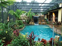 tropical freeform pool with screened enclosure