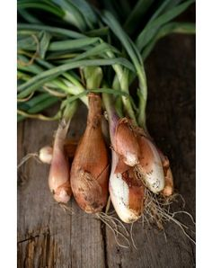 Buy your carrot seeds online from Pinetree Garden Seeds. Shop our carrot seed collection now. Herb Seeds, Garden Seeds, Herb Garden, Vegetable Garden, Garden Organization, Perennial Vegetables, Carrot Seeds, Growing Gardens, Seeds Online